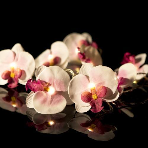 Orchid Fairy Lights
